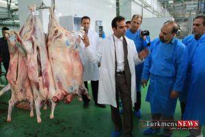 Koshtargah TurkmensNews 1