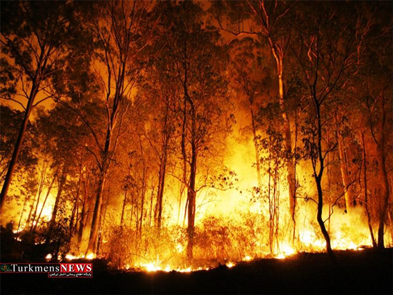آتشسوزی در جزیره میانکاله همچنان ادامه دارد