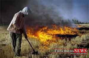 کشاورزان مراقب آتش سوزی گندمزارها باشند