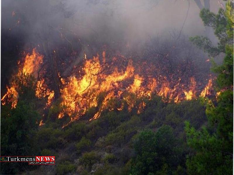 آتش سوزی جزیره میانکاله اطفا شد
