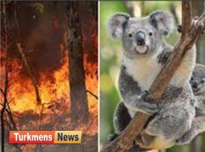 سوزی در استرالیا 300x222 - آتش سوزی در استرالیا باعث نابودی 480 میلیون حیوان شد