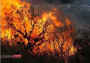 سوزی چهار نقطه ا ز مناطق جنگلی گالیکش 300x211 - آتش سوزی چهار نقطه از مناطق جنگلی گالیکش