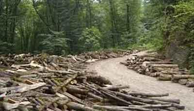هیرکانی - آیا جایگزینی برای قطع نکردن بی رویه جنگلهای هیرکانی وجود دارد؟