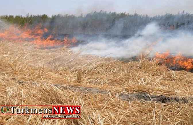 ضرورت آتش نزدن بقایای گیاهی در مزارع گندم