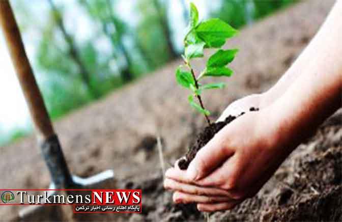 قاضی گلستانی، محکوم زیست محیطی را به احیای نهالهای جنگلی محکوم کرد