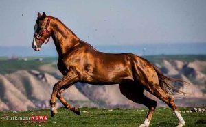 فعالیت کار گروه اسب اصیل ترکمن در خراسانشمالی