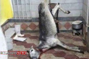 """ذبحشده 300x199 - جزئیات تازه از """"الاغ ذبحشده"""" در گرگان؛ دستور دستگیری متهم صادر شد"""