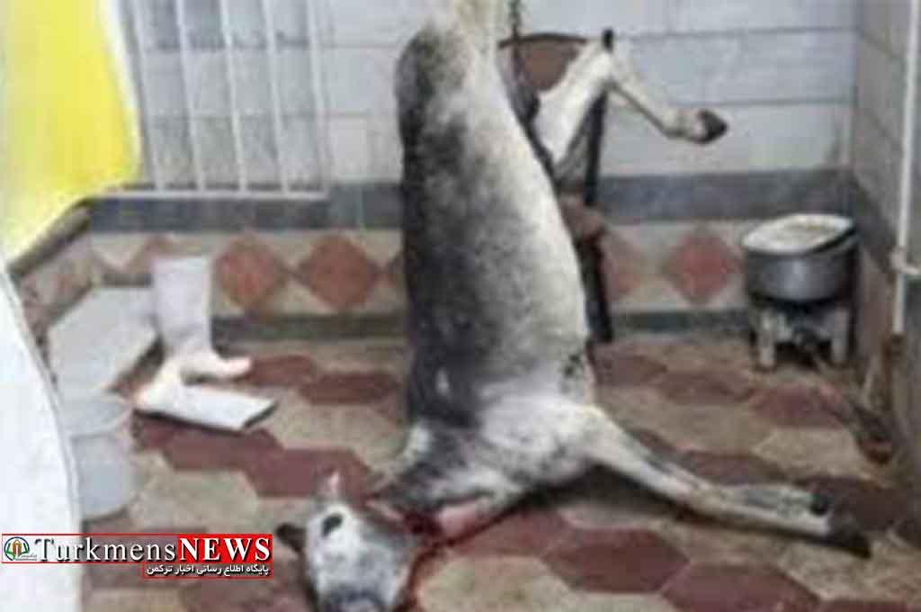"""جزئیات تازه از """"الاغ ذبحشده"""" در گرگان؛ دستور دستگیری متهم صادر شد"""