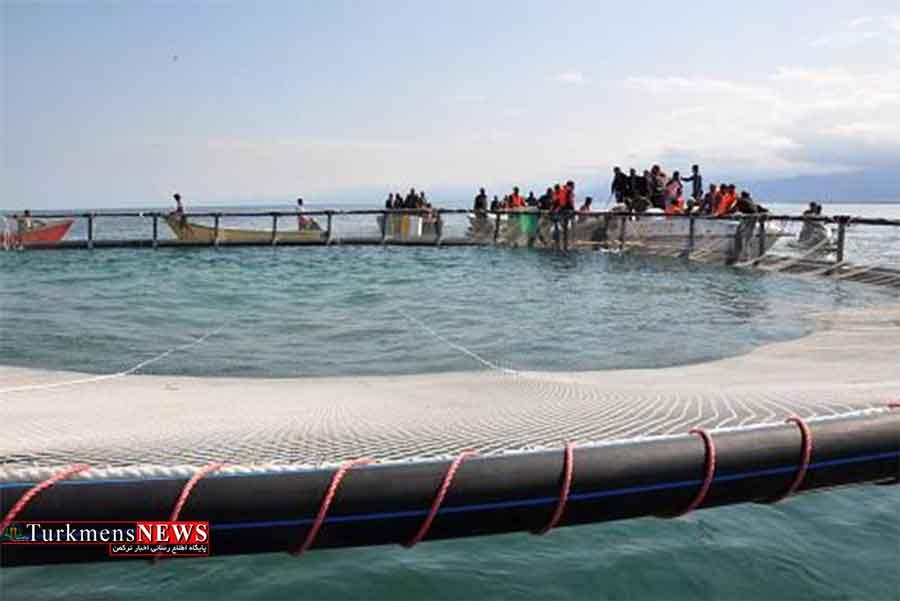 ایران و مالزی در پرورش ماهی در قفس و پن در سواحل گلستان همکاری می کنند