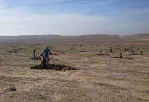 های گلستان 300x206 - بیابانهای گلستان برای احیا به بخش خصوصی واگذار میشود