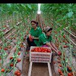 35 150x150 - نمایی از صنعت و کشاورزی در ترکمنستان