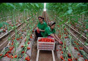 35 300x209 - نمایی از صنعت و کشاورزی در ترکمنستان
