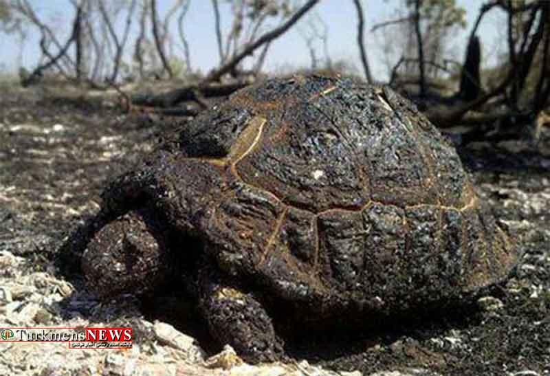 تلفات وحوش پارک ملی گلستان در آتش سوزی اخیر قابل احصا نیست