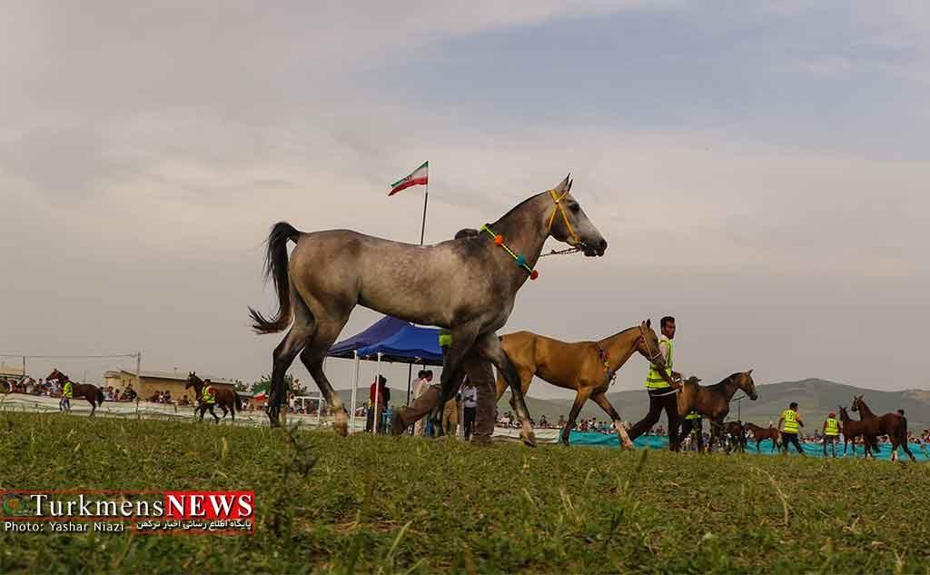 مسابقه اسب خالص و زایچه ایرانی برگزار میشود