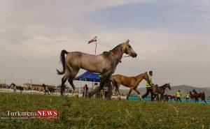 مسابقات زیبایی اسب ترکمن صحرا