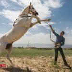 جشنواره زیبایی اسب اصیل ترکمن در راز و جرگلان برگزار می شود
