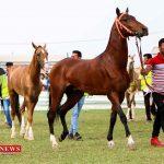 ملی زیبایی اسب اصیل ترکمن 150x150 - پانزدهمین جشنواره ملی زیبایی اسب اصیل ترکمن در کلاله برگزار میشود