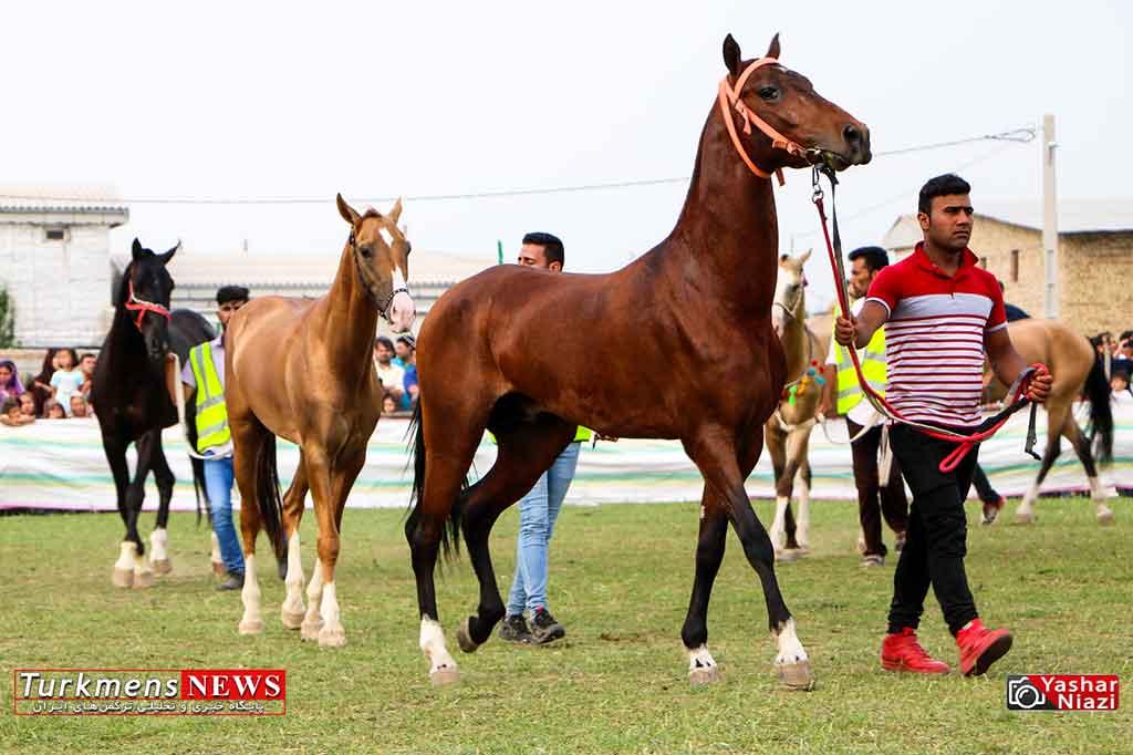 پانزدهمین جشنواره ملی زیبایی اسب اصیل ترکمن در کلاله برگزار میشود