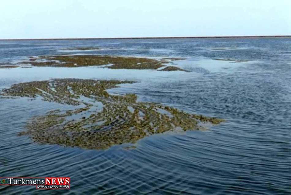 جلبک ها نفس خلیج گرگان را به شماره انداخت