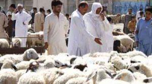 علمای مسلمان الجزائر ذبح قربانی 300x165 - تکذیب عدم ذبح قربانی امسال بخاطر کرونا