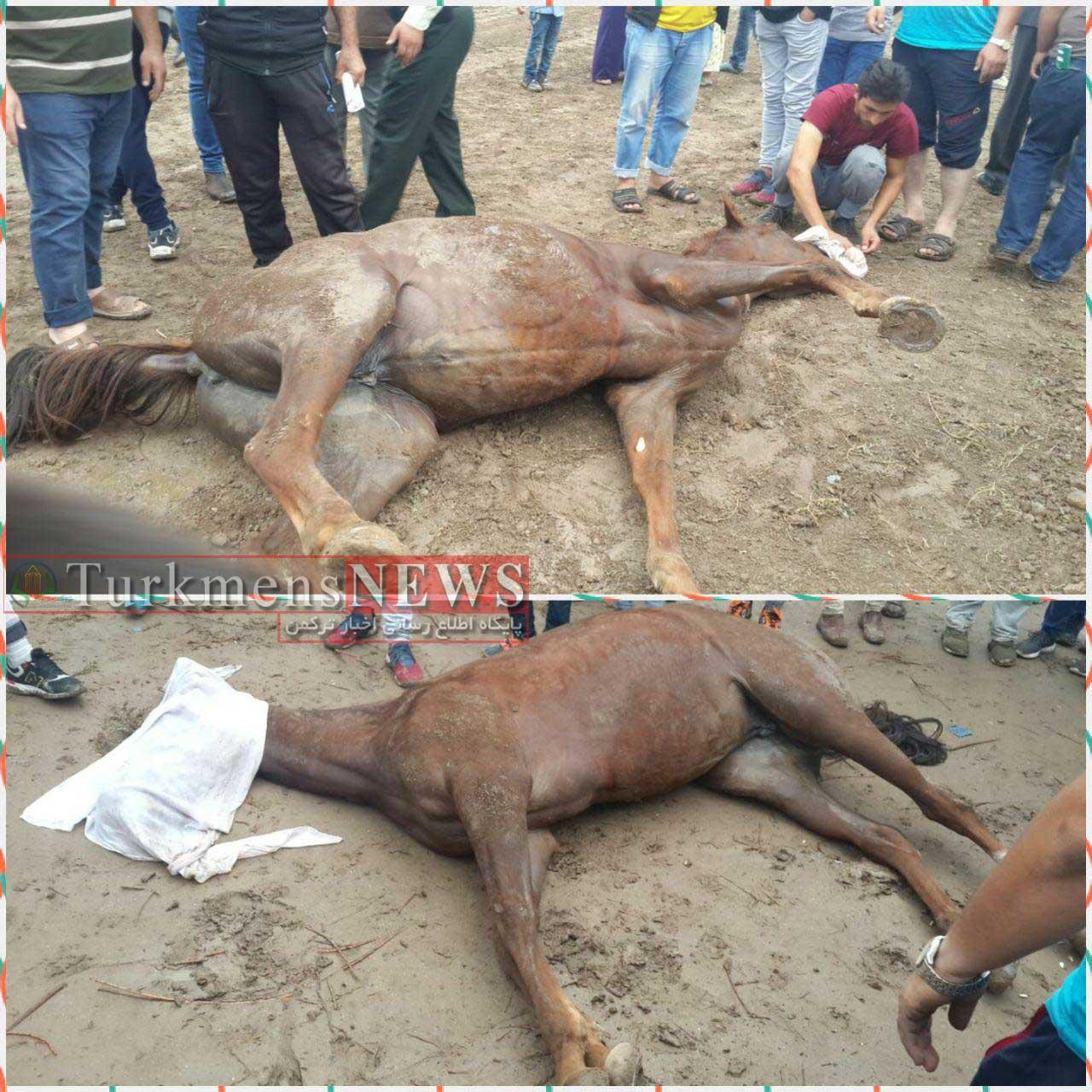 حادثه در هفته اول مسابقات اسبدوانی شهرستان آق قلا