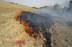 30 هکتار از مزارع گندم در شهرستان کلاله طعمه حریق شد