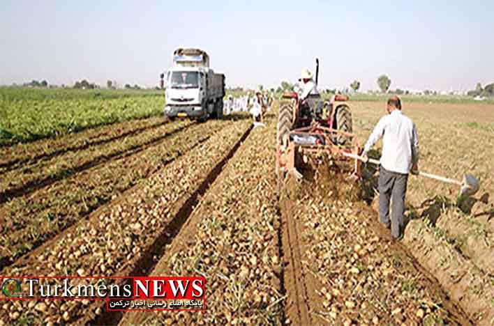 استقبال کشاورزان گلستان از خرید تضمینی سیب زمینی