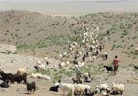 عشایر گلستان - سایه سنگین خشکسالی بر زندگی و تولیدات دامی عشایر گلستان