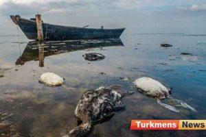 گرگان 1 1 300x200 - تلفات عجیب پرندگان در خلیج گرگان تکرار میشود؟