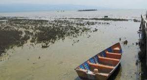 گرگان 10 300x164 - هشدار درمورد تبدیل خلیج گرگان به تالابی مرطوب
