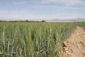 زار استان گلستان 300x200 - امید کشاورزان گلستان برای رونق دیمزارها