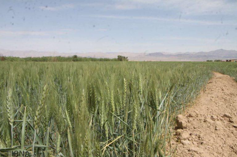 زار استان گلستان 768x511 - امید کشاورزان گلستان برای رونق دیمزارها