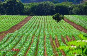 اراضی 300x196 - افزایش تولید محصولات با زهکشی اراضی