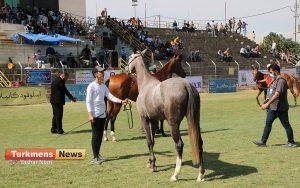 اسب علی آباد کتول 4 300x188 - دومین مسابقه ملی زیبایی آیینی اسب ترکمن در شهرستان علی آباد کتول برگزار شد