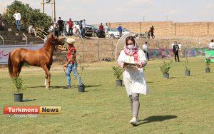 اسب علی آباد کتول 5 300x188 - دومین مسابقه ملی زیبایی آیینی اسب ترکمن در شهرستان علی آباد کتول برگزار شد