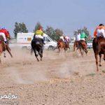برگزاری کورس اسبدوانی بهاره بندرترکمن از ۱۷ خرداد