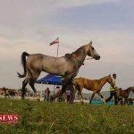 عملیات ساماندهی زیر ساخت های مجموعه اسب دوانی صوفیان کلاله آغاز شد