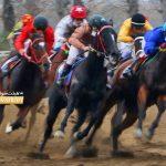 1 150x150 - روز اول هفته پنجم کورس اسبدوانی پاییزه در گنبدکاووس برگزار شد