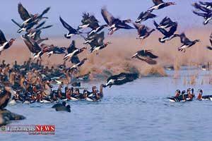 پرندگان گلستان1 300x200 - شکار پرندگان در گلستان ممنوع شد