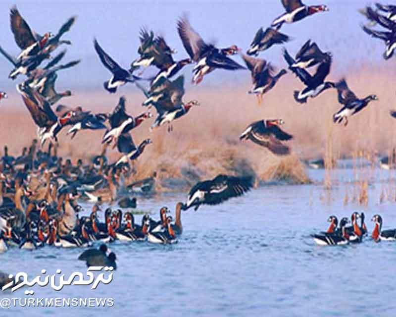 پرندگان - پرندگان در دام پروانههای سازمان محیط زیست