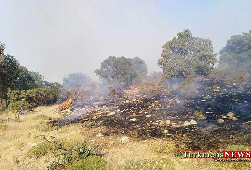 عاملین آتش سوزی جنگل های نیلکوه در دادسرا