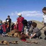 ترکمنستان ترکمن نیوز 150x150 - قربانی و مفتیِ عقل