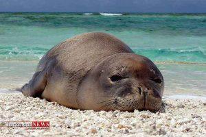 خزری 3 300x200 - خطر، خطر! برای تنها پستاندار دریای خزر، فک خزری!