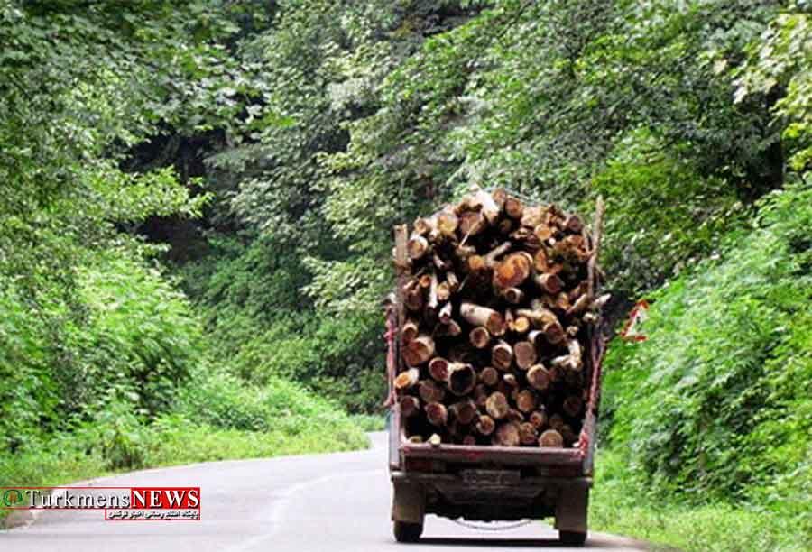 قاچاق چوب در صدر پروندههای قاچاق استان گلستان قرار دارد
