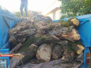 چوب منابع طبیعی 300x225 - چشمان بیدار نیروهای منابع طبیعی جهت مقابله با قاچاق چوب