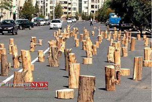 قاچاق چوب در شمال