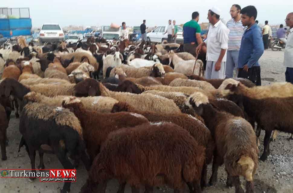 قیمت گوسفند قربانی در عید قربان 1397