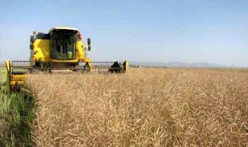 کشاورزی گنبدکاووس - آغاز برداشت محصولات پاییزه در گنبدکاووس