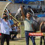 زیبایی اسب اصیل ترکمن 4 150x150 - مسابقات ملی زیبایی آیینی اسب اصیل ترکمن به میزبانی علی آباد برگزار شد+عکس
