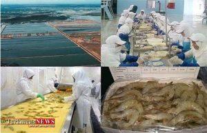 1 300x193 - ۸۰ درصد میگو در استان گلستان به خارج از کشور صادر میشود